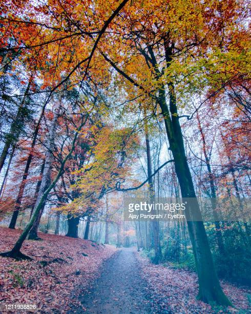 trees in forest during autumn - autumn stock pictures, royalty-free photos & images