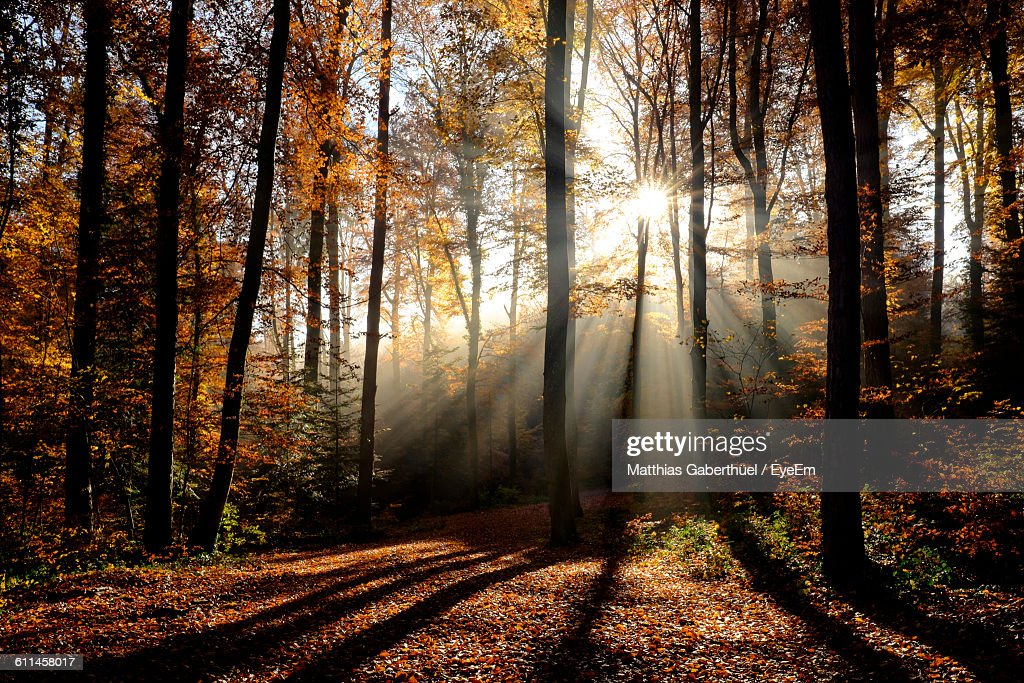 Trees In Forest During Autumn : Stock-Foto