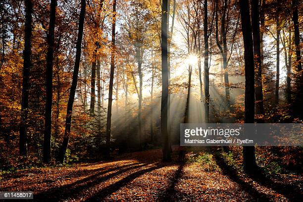 trees in forest during autumn - matthias gaberthüel stockfoto's en -beelden