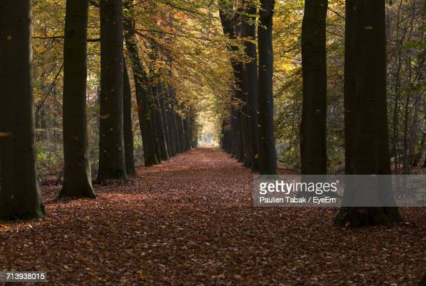 trees in forest during autumn - paulien tabak stock pictures, royalty-free photos & images