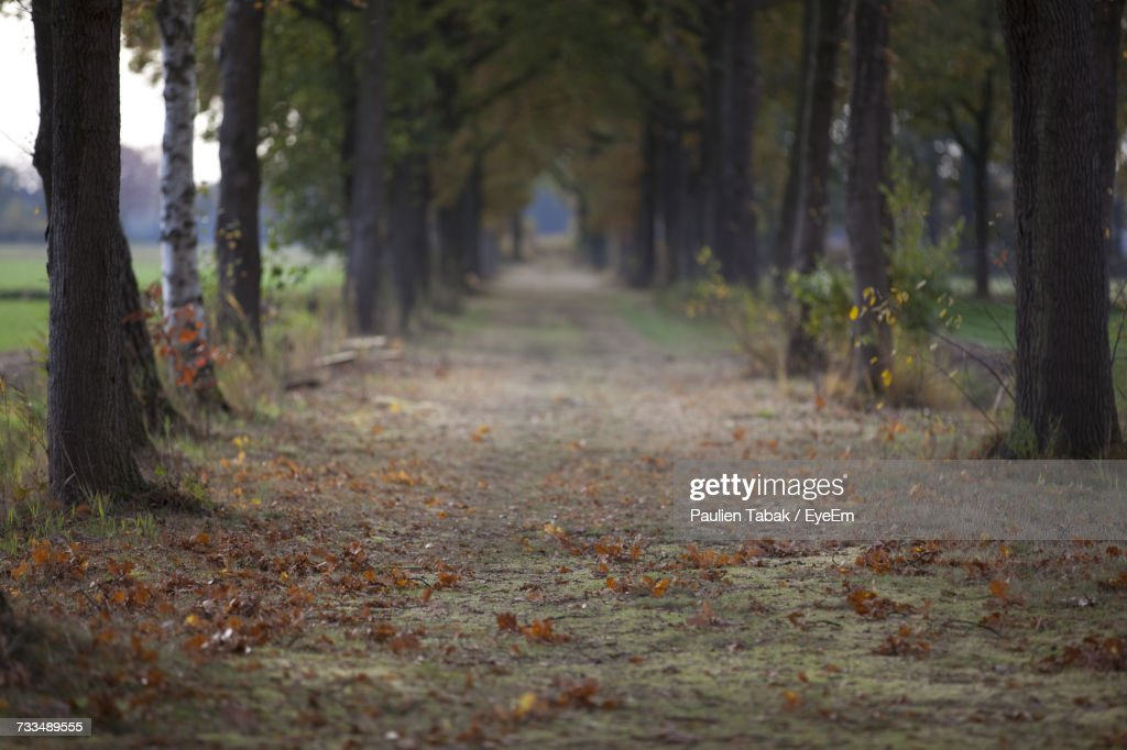 Trees In Forest During Autumn : Stockfoto