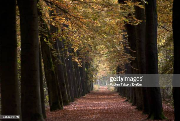 trees in forest during autumn - paulien tabak photos et images de collection