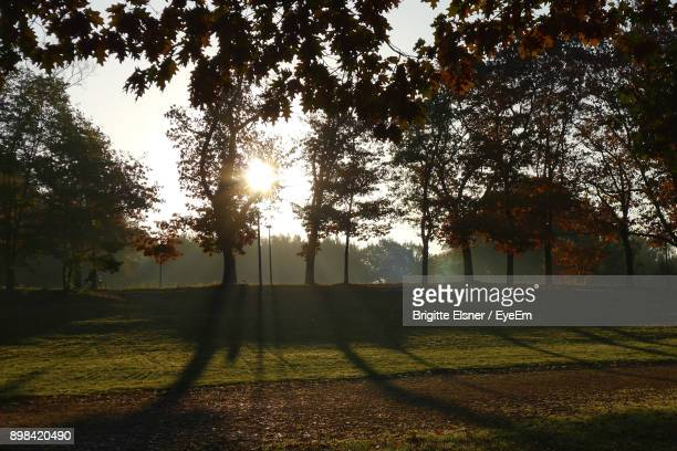 trees in forest during autumn - erlangen stock photos and pictures