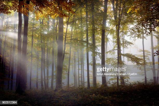 trees in forest during autumn - transylvania stock pictures, royalty-free photos & images