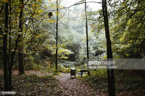 trees in forest during autumn - tilburg stock pictures, royalty-free photos & images