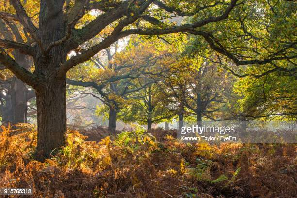 trees in forest during autumn - surrey england stock photos and pictures