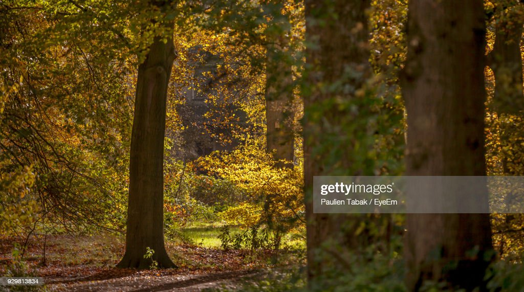 Trees In Forest During Autumn : Stock Photo
