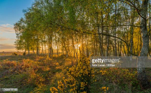 trees in forest during autumn, ringwood, united kingdom - images stock pictures, royalty-free photos & images