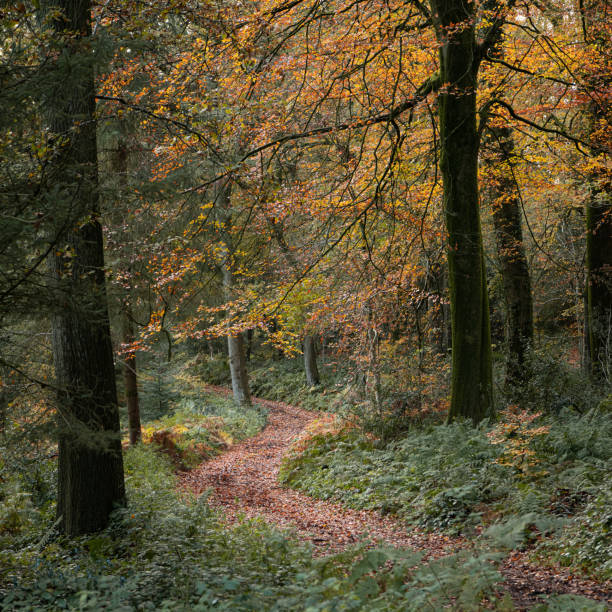 Trees In Forest During Autumn, Wincanton, United Kingdom