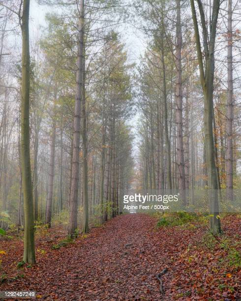 trees in forest during autumn,england,united kingdom,uk - plant part stock pictures, royalty-free photos & images