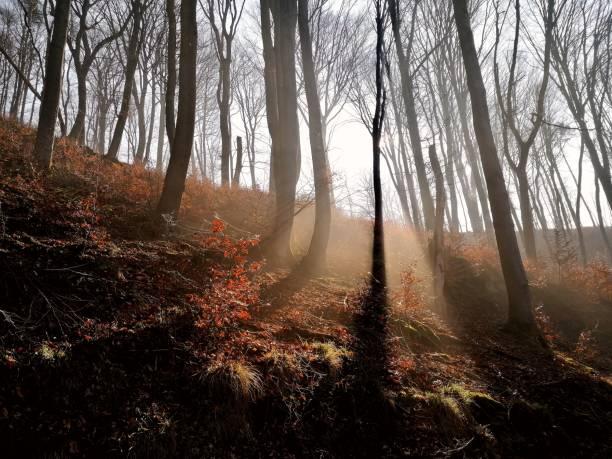 Trees in forest during autumn,Puchenau,Austria