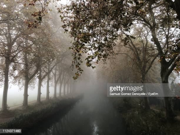trees in forest during foggy weather - canal du midi photos et images de collection