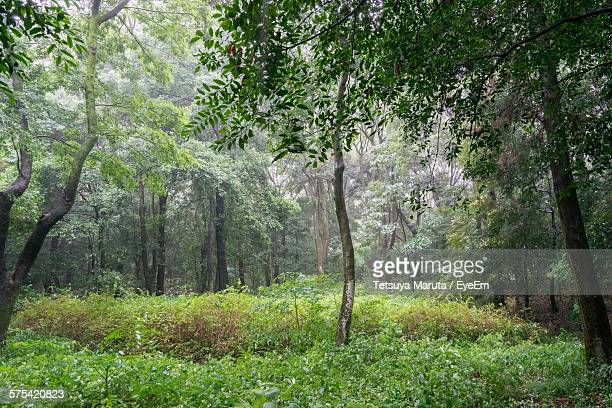 Trees In Forest During Rainy Season
