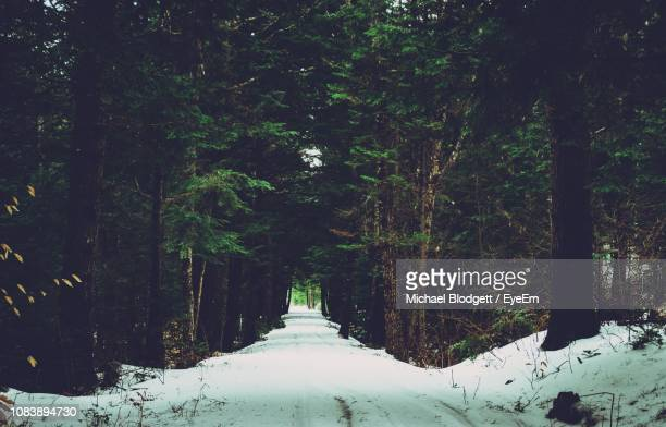 trees in forest during winter - michael blodgett stock pictures, royalty-free photos & images