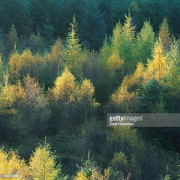 Trees in forest illuminated by sunlight