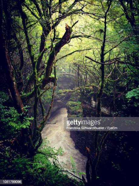 trees in forest - georgia country stock pictures, royalty-free photos & images