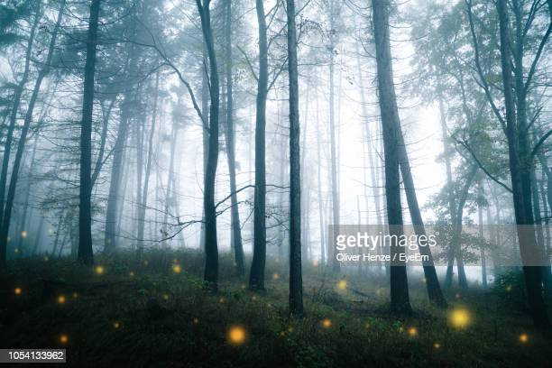 trees in forest - glowworm stock pictures, royalty-free photos & images