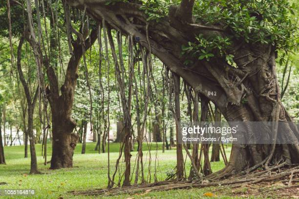 trees in forest - bortes stock photos and pictures