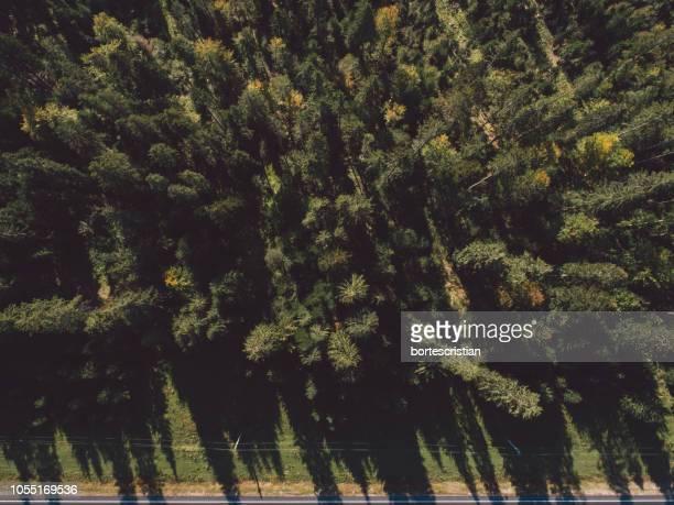 trees in forest - bortes foto e immagini stock