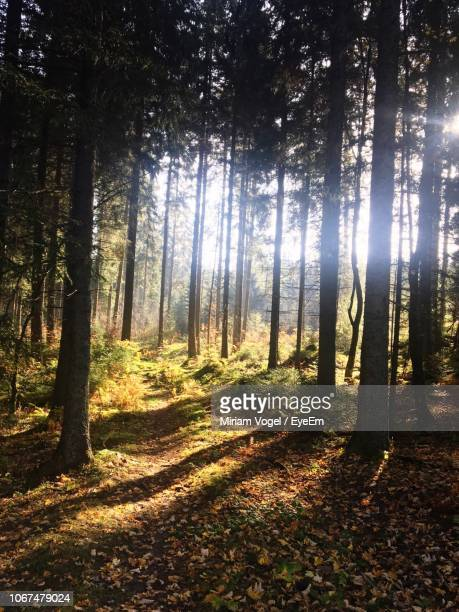 trees in forest - vogel stock pictures, royalty-free photos & images