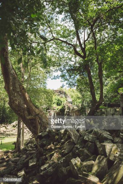 trees in forest - bortes fotografías e imágenes de stock