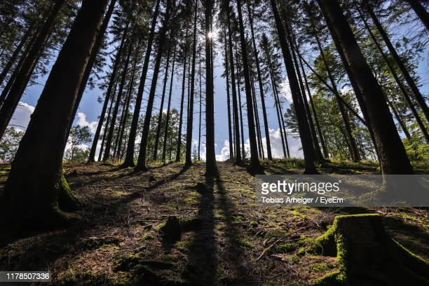 trees in forest - north rhine westphalia stock pictures, royalty-free photos & images