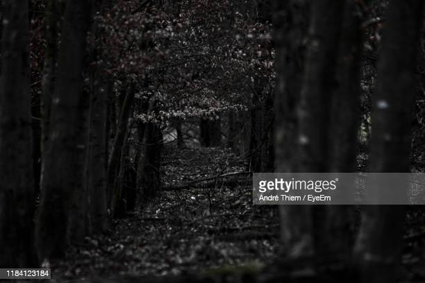trees in forest - thiem stock pictures, royalty-free photos & images