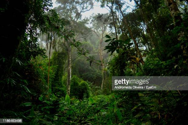 trees in forest - south america stock pictures, royalty-free photos & images