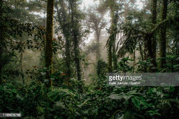 trees in forest - rainforest stock pictures, royalty-free photos & images