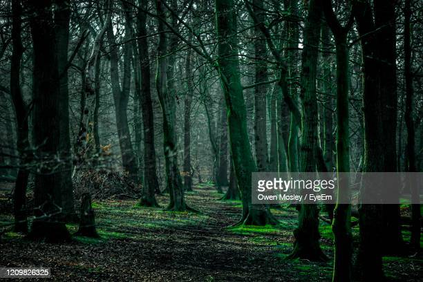 trees in forest - carlisle stock pictures, royalty-free photos & images