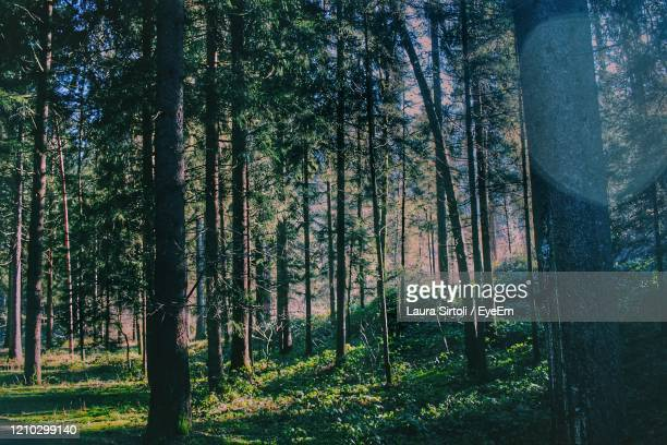 trees in forest - laura woods stock pictures, royalty-free photos & images