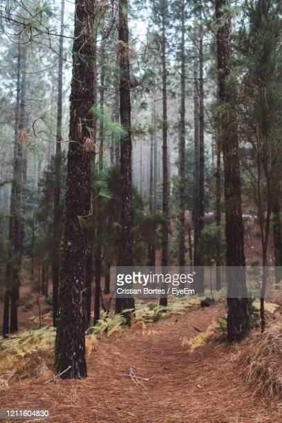 trees in forest - bortes stock pictures, royalty-free photos & images