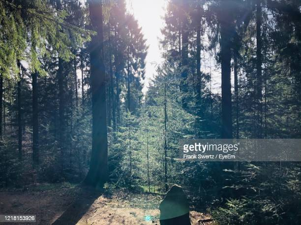 trees in forest - frank swertz stock pictures, royalty-free photos & images