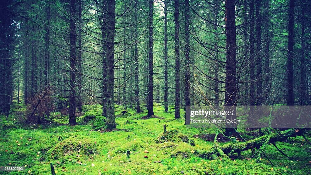 Trees In Forest : Foto stock
