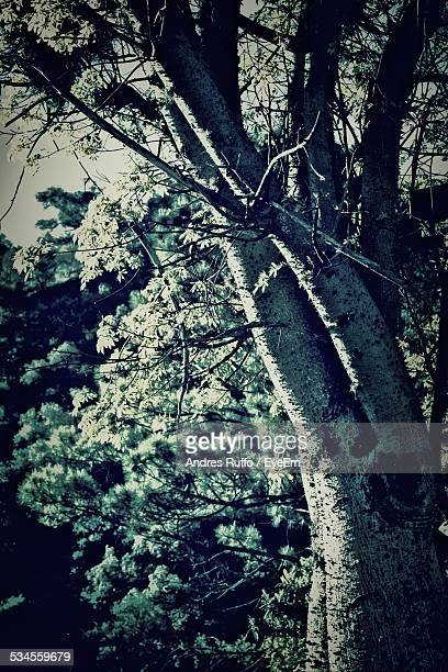 trees in forest - andres ruffo stock pictures, royalty-free photos & images