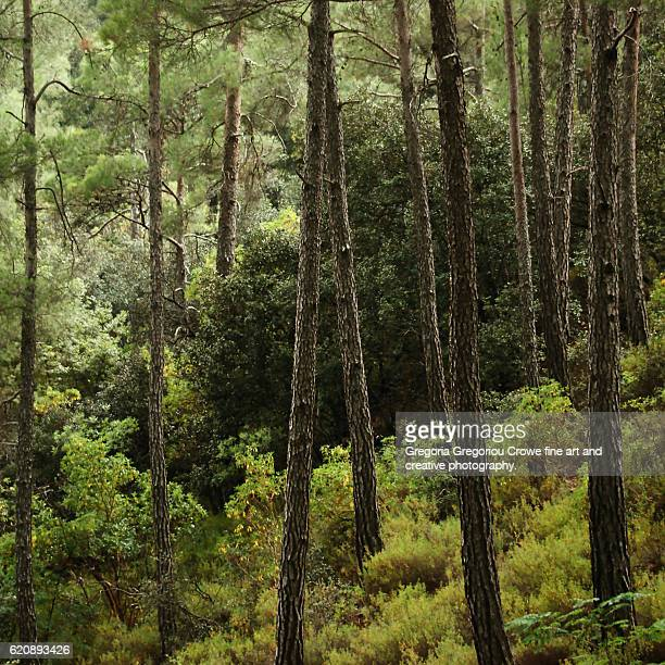 trees in forest - gregoria gregoriou crowe fine art and creative photography. stock pictures, royalty-free photos & images