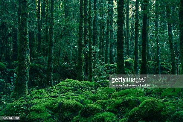 trees in forest - 森林 ストックフォトと画像
