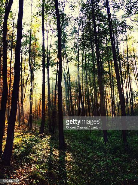 trees in forest - ostrava stock pictures, royalty-free photos & images