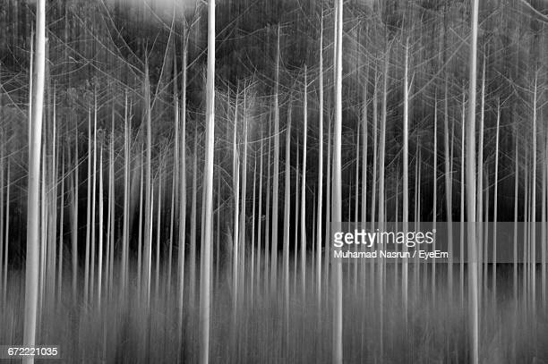 trees in forest - muhamad nasrun stock pictures, royalty-free photos & images