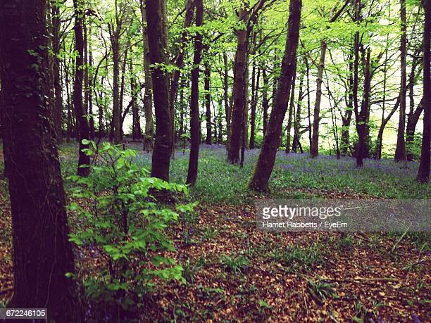 trees in forest - harriet stock photos and pictures