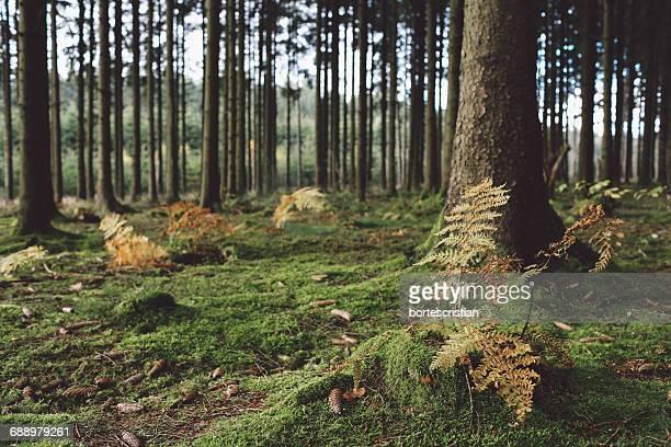 trees in forest - bortes stockfoto's en -beelden