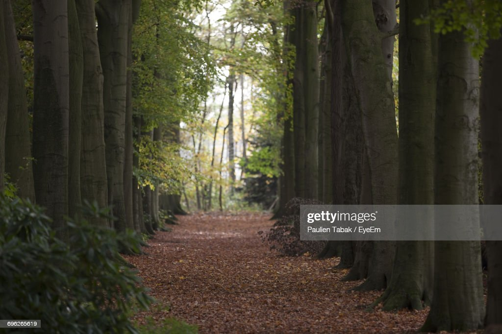 Trees In Forest : Stockfoto