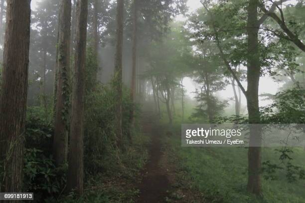 trees in forest - kanagawa prefecture stock pictures, royalty-free photos & images