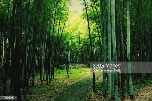 trees in forest - bamboo forest stock photos and pictures