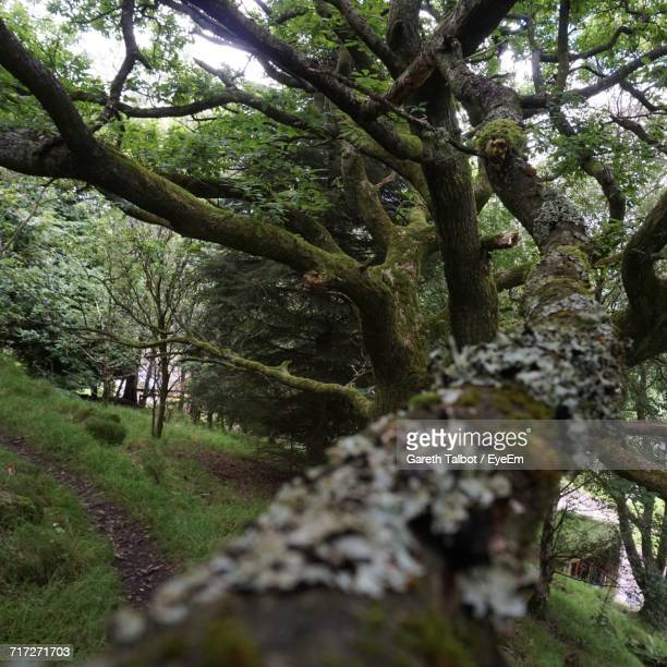 trees in forest - mytholmroyd stock pictures, royalty-free photos & images