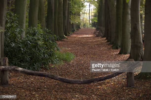 trees in forest - paulien tabak stock pictures, royalty-free photos & images