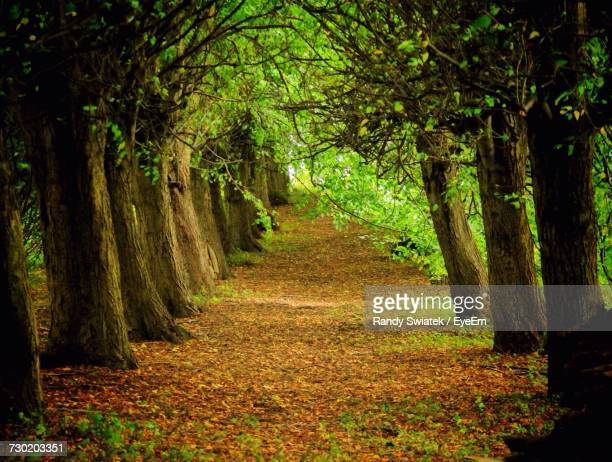 trees in forest - swiatek stock pictures, royalty-free photos & images
