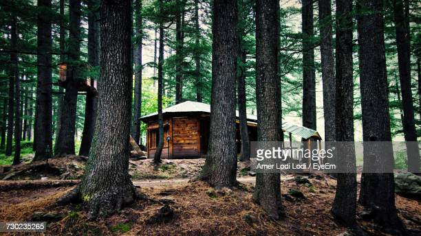 trees in forest - log cabin stock pictures, royalty-free photos & images