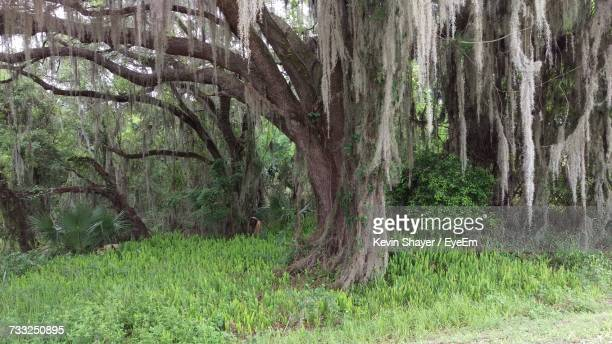trees in forest - plant city stock pictures, royalty-free photos & images