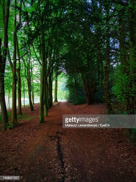 trees in forest - lewandowski stock photos and pictures